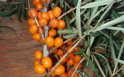Rakytníková s pomerančem