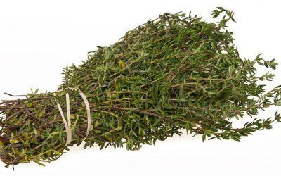Tymián (Thymus vulgarit)
