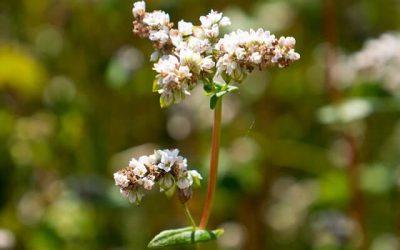 Co jsou flavonoidy?
